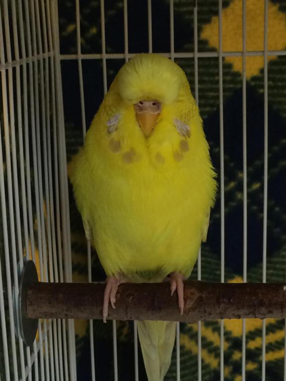 Current flock-image_1442414669104.jpg