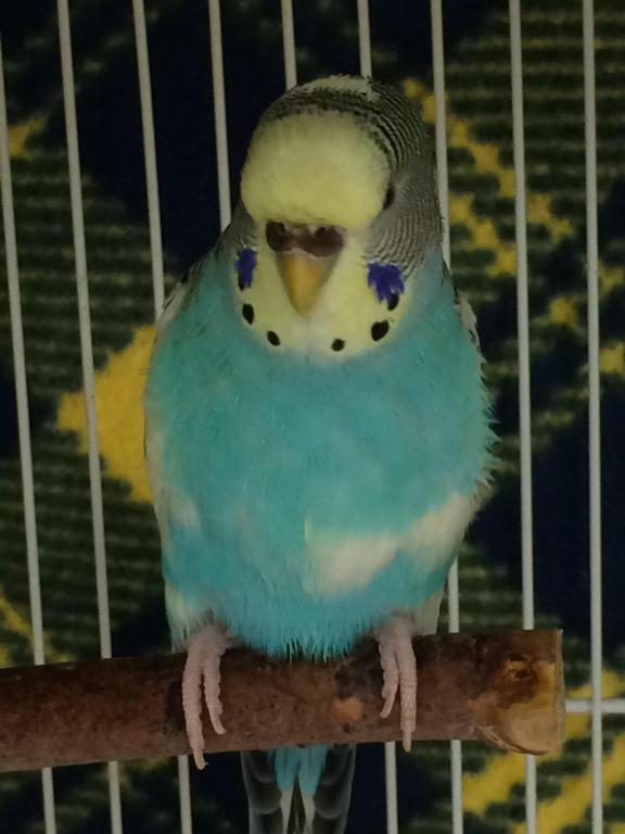 Current flock-image_1442414685808.jpg