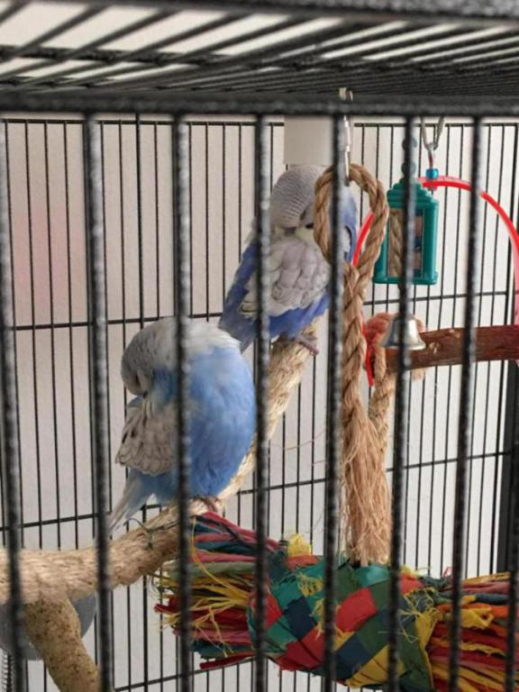 Pico and Paco (Ongoing Thread)-image_1449595509379.jpg