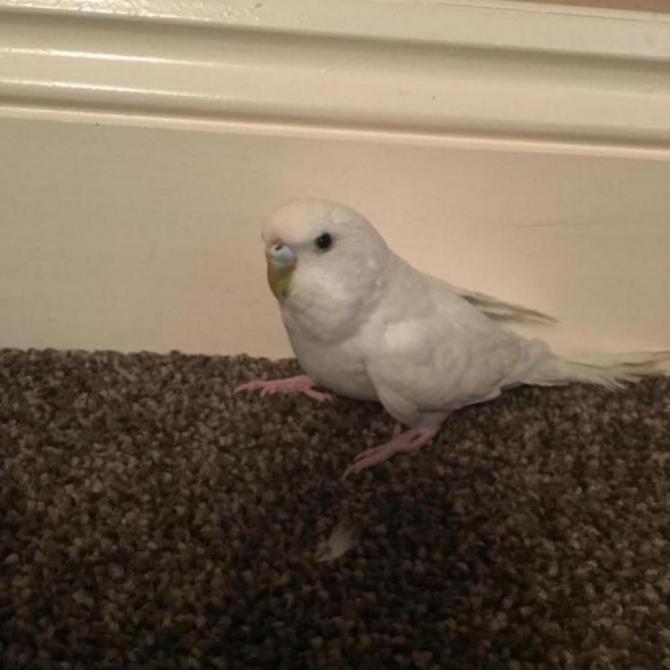 My Flock-image_1452978035007.jpg