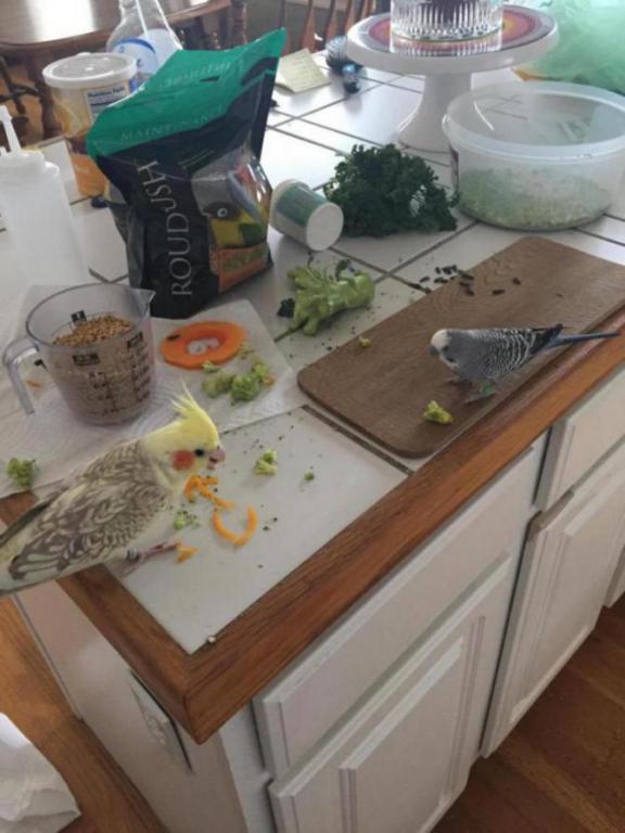 My birdies get better food than me-image_1454279224890.jpg