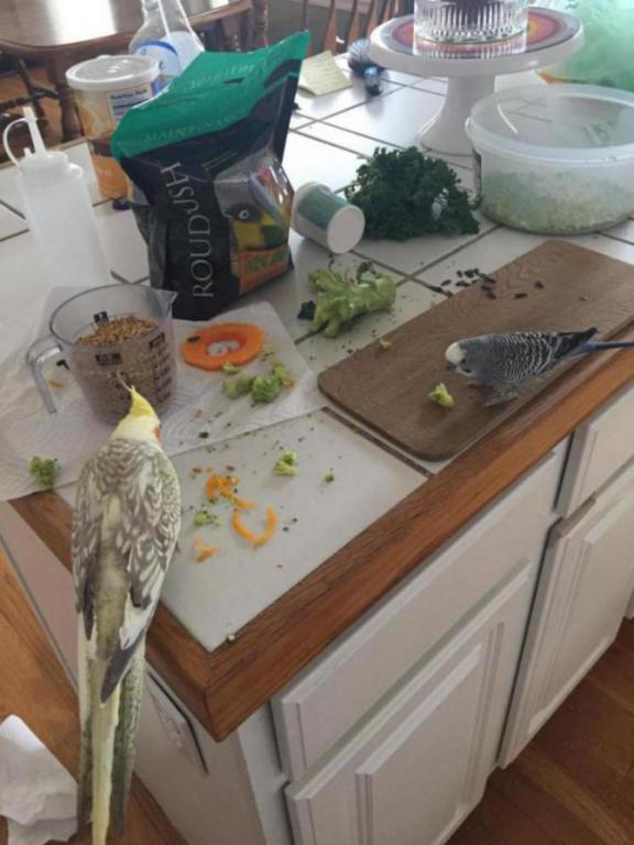 My birdies get better food than me-image_1454279259866.jpg