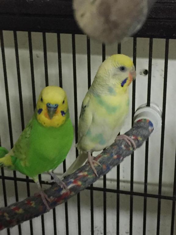 My Flock-image_1454906527363.jpg