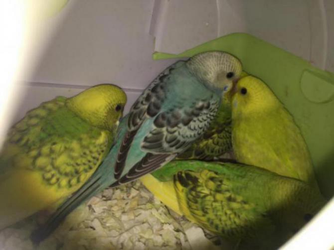 My Flock-image_1454906551402.jpg