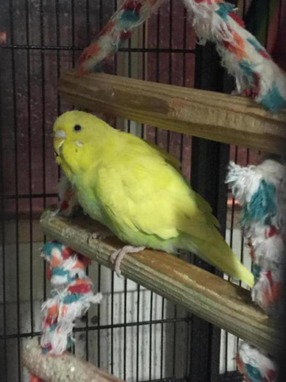 My Flock-image_1454906888399.jpg