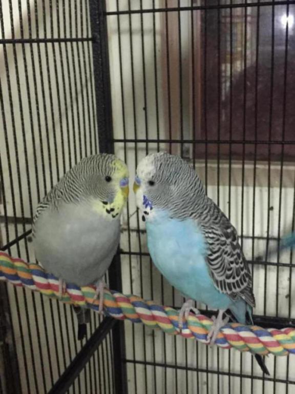My Flock-image_1454906941428.jpg