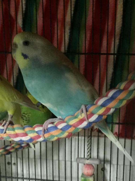 My Flock-image_1454906987021.jpg