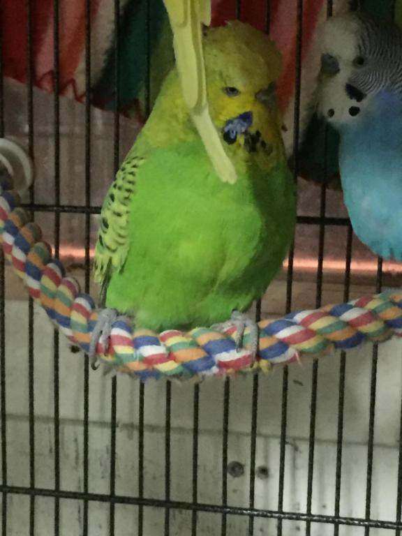 My Flock-image_1454907021305.jpg