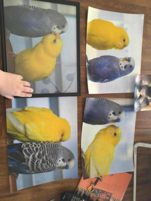 Rickey, Tweetsum and the tiels(ongoing thread)-image_1455233916854.jpg