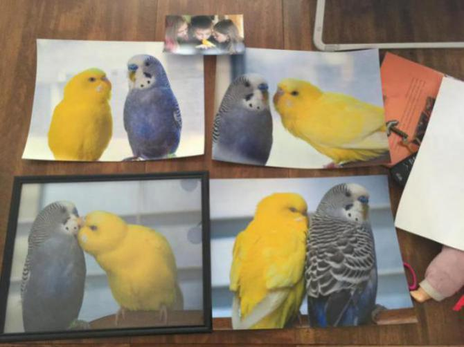 Rickey, Tweetsum and the tiels(ongoing thread)-image_1455233985046.jpg