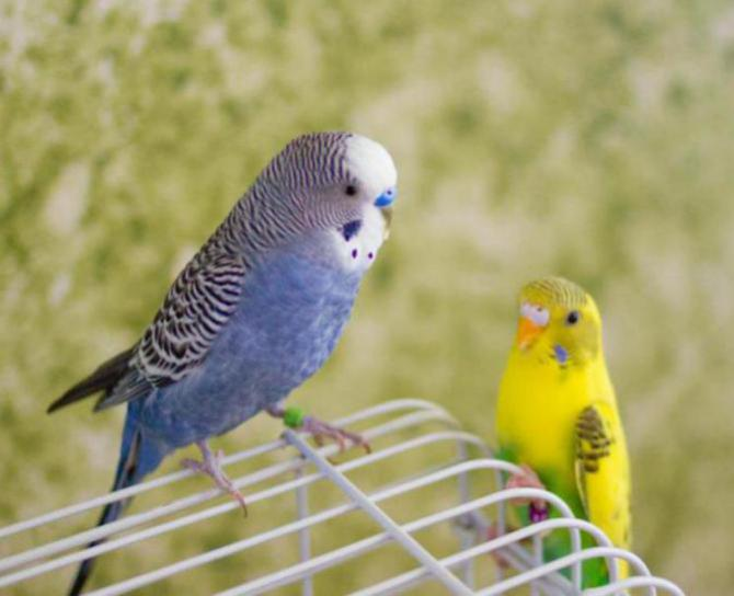 Rickey, Tweetsum and the tiels(ongoing thread)-image_1455467334437.jpg