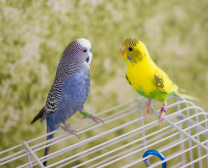 Rickey, Tweetsum and the tiels(ongoing thread)-image_1455467413255.jpg