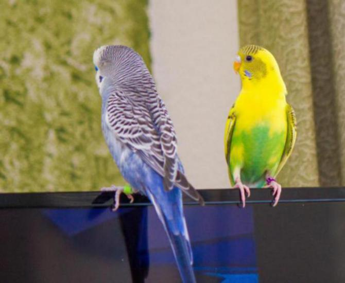 Rickey, Tweetsum and the tiels(ongoing thread)-image_1455467436021.jpg