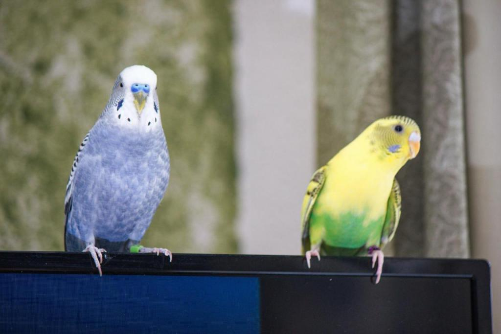 Rickey, Tweetsum and the tiels(ongoing thread)-image_1455467454821.jpg
