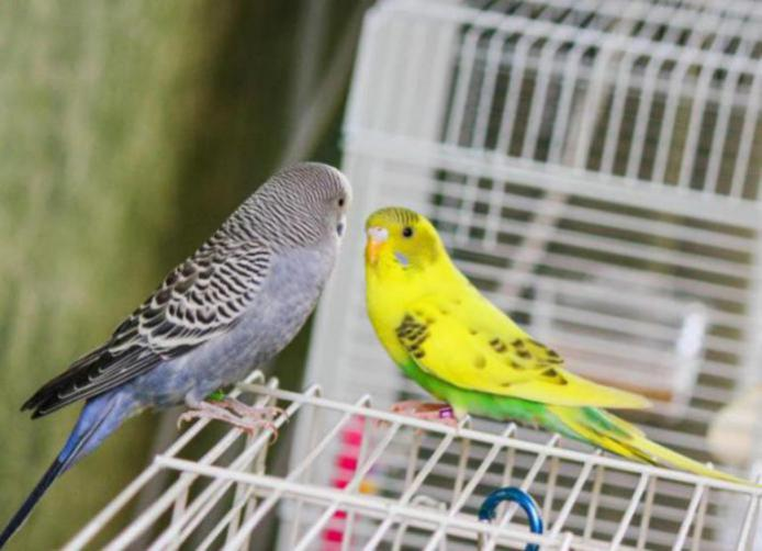 Rickey, Tweetsum and the tiels(ongoing thread)-image_1455467509639.jpg