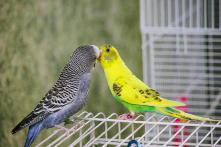 Rickey, Tweetsum and the tiels(ongoing thread)-image_1455467545223.jpg