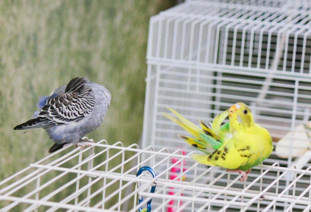 Rickey, Tweetsum and the tiels(ongoing thread)-image_1455467632694.jpg
