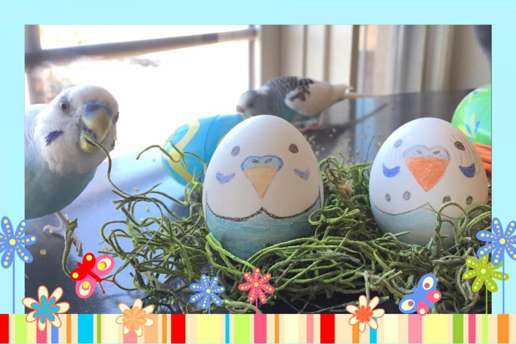 Easter Budgies-image_1459119630827.jpg
