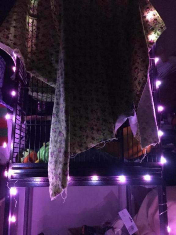 Stringy led lights-image_1469682009745.jpg