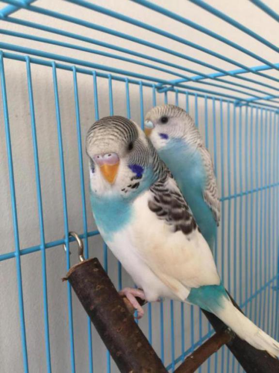 2 Aggressive Males...?-image_1470706450307.jpg