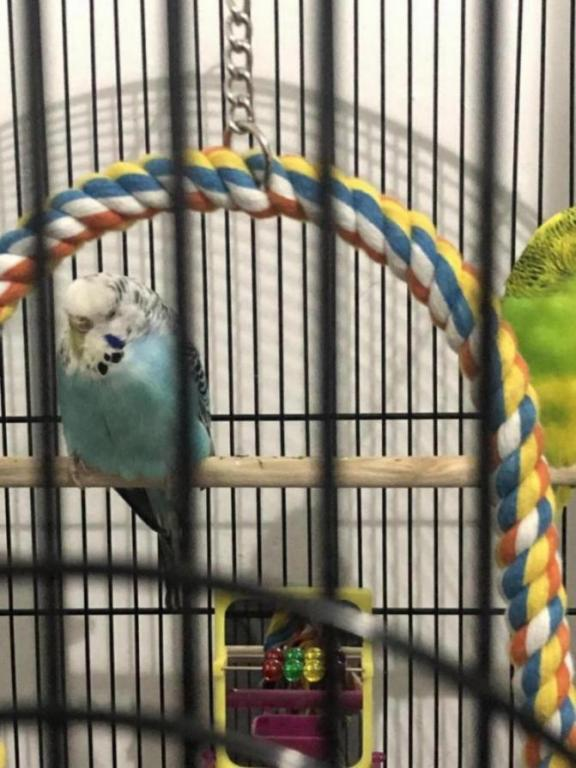 Is my budgie ill?-image_1610128571212.jpg