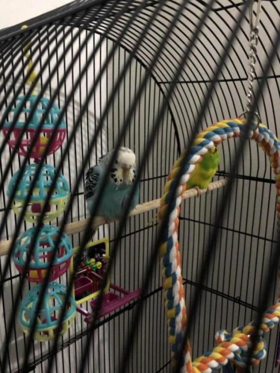 Is my budgie ill?-image_1610133290011.jpg