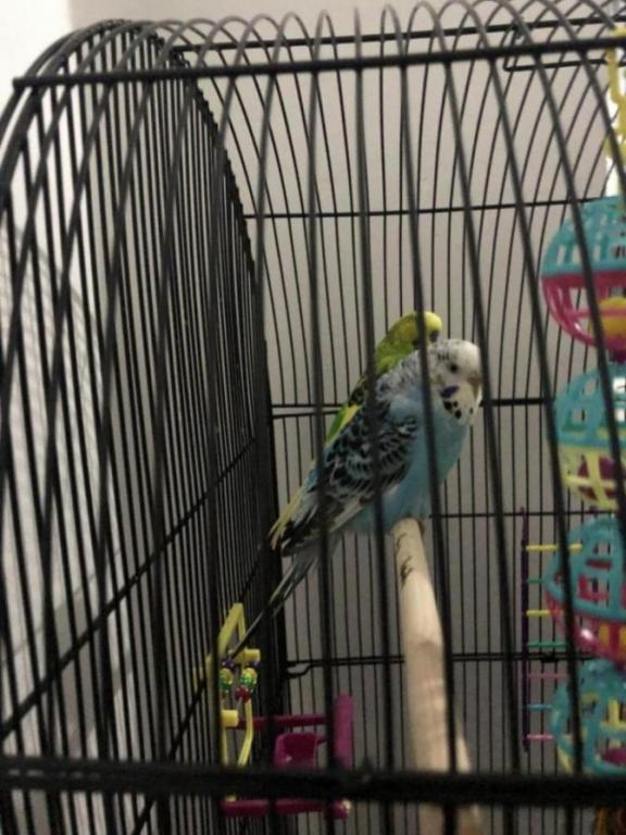 Is my budgie ill?-image_1610133310345.jpg