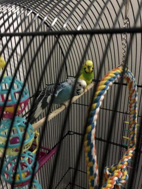 Is my budgie ill?-image_1610133342913.jpg