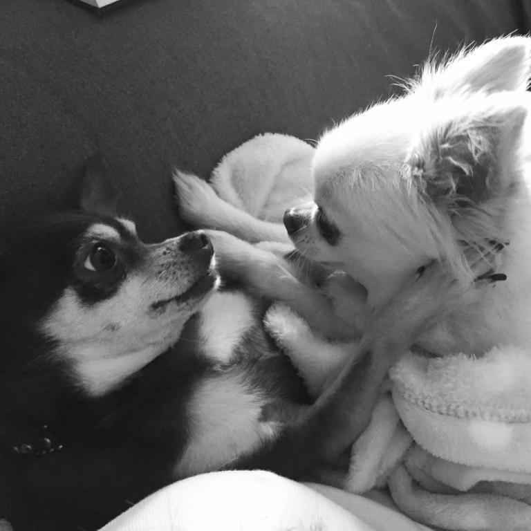 Budgies & Other pets-imageuploadedbypetguide1421649029.930594.jpg
