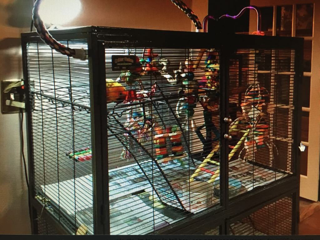 Cage opinions-imageuploadedbypetguide1454443955.188789.jpg