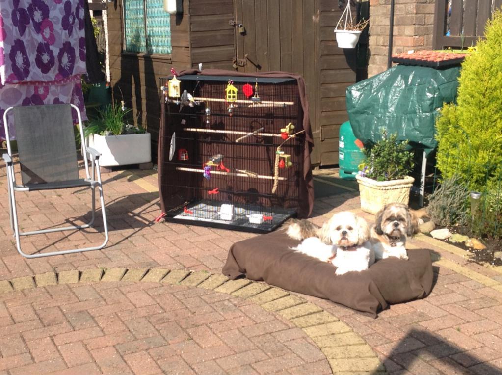 My dogs on budgie watch-imageuploadedbypg-free1396362040.807345.jpg