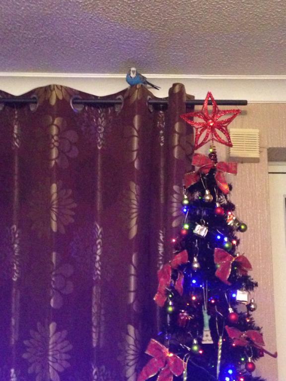 Merry Christmas from Joey!-imageuploadedbypg-free1419098002.241587.jpg