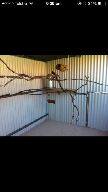 How do I get rid of mites in an aviary-imageuploadedbypg-free1434888040.461888.jpg