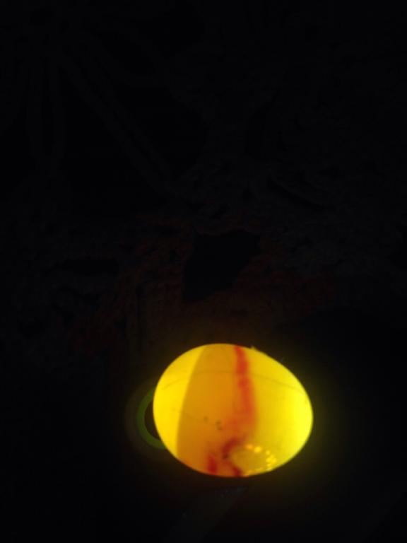 Is this is egg dead?-imageuploadedbypg-free1436372153.423689.jpg