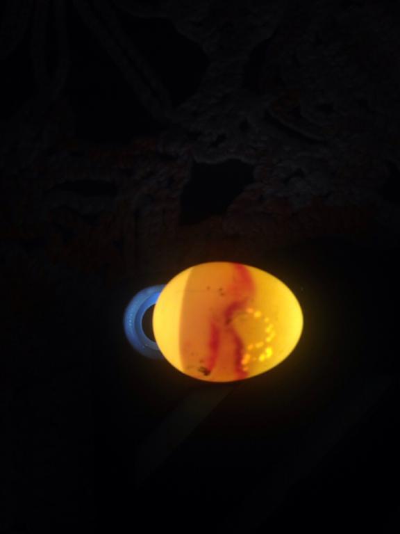 Is this is egg dead?-imageuploadedbypg-free1436372162.956196.jpg