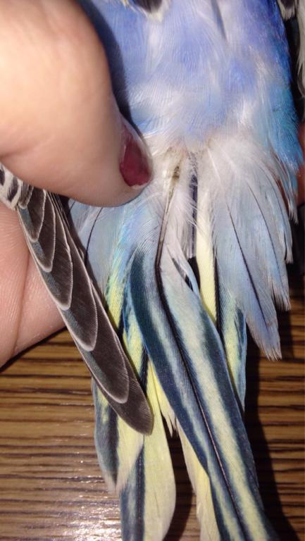 Broken feather maybe? Help!-imageuploadedbypg-free1445564948.337784.jpg