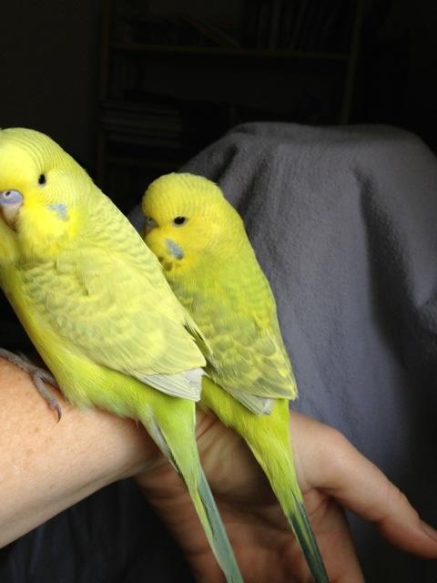 Mutation check on the babies!-imageuploadedbytapatalk-21369696185.920241.jpg
