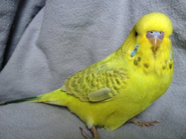 Mutation check on the babies!-imageuploadedbytapatalk-21369696247.867066.jpg