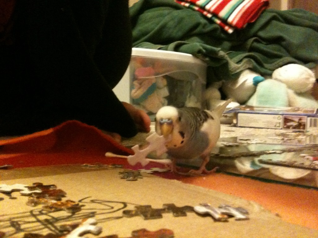 Thief!!-imageuploadedbytapatalk1361089294.554579.jpg