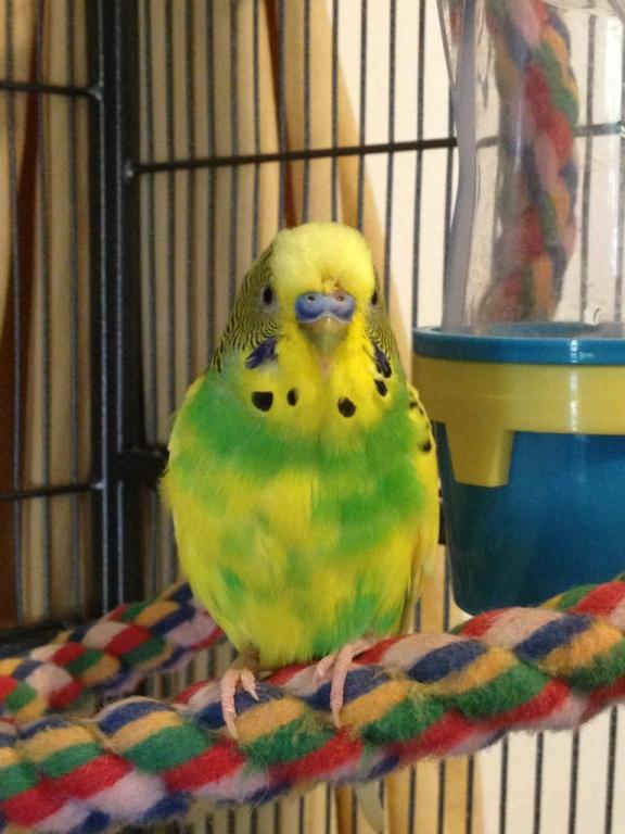 My current flock-imageuploadedbytapatalk1364480190.239767.jpg