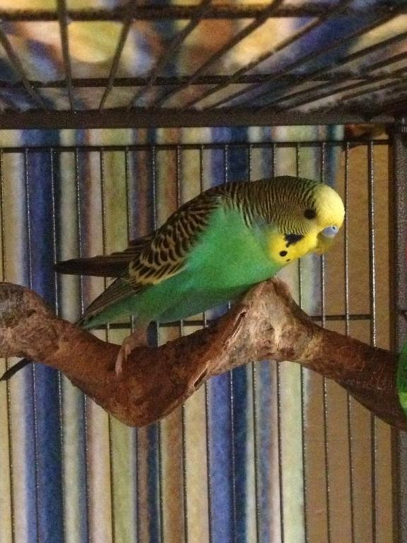 My current flock-imageuploadedbytapatalk1364480230.818697.jpg