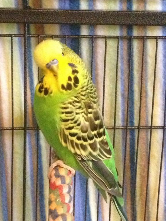 My current flock-imageuploadedbytapatalk1364480305.037885.jpg