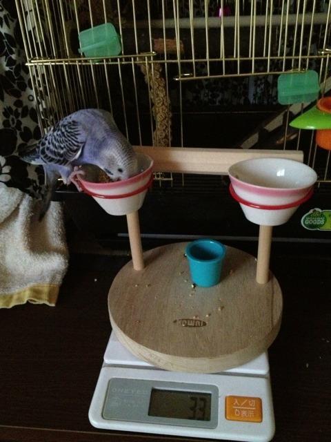 Pinko settling in :)-imageuploadedbytapatalk1366590335.951318.jpg