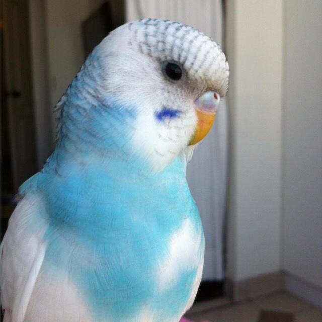 My baby Ibi (On-going Thread)-imageuploadedbytapatalk1458691802.737277.jpg