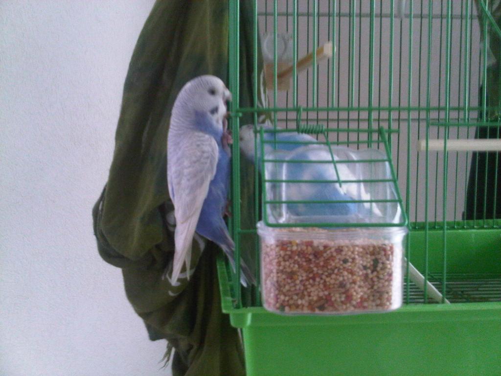 RIP Prinny-img-20120119-00504.jpg