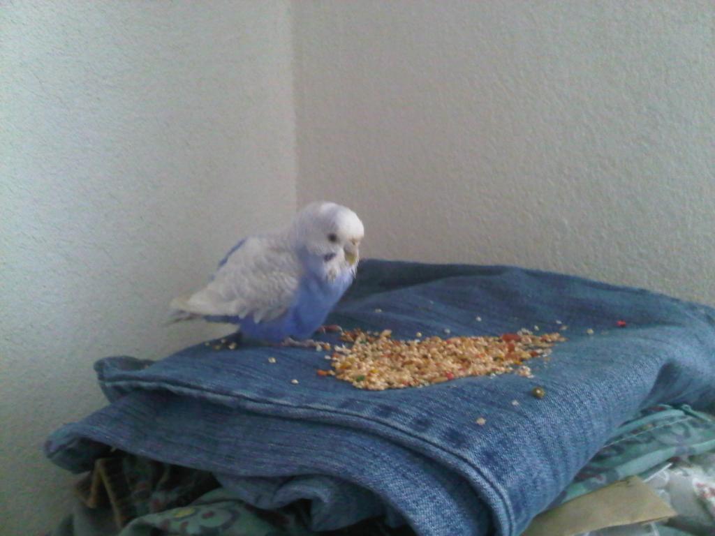 RIP Prinny-img-20120119-00506.jpg
