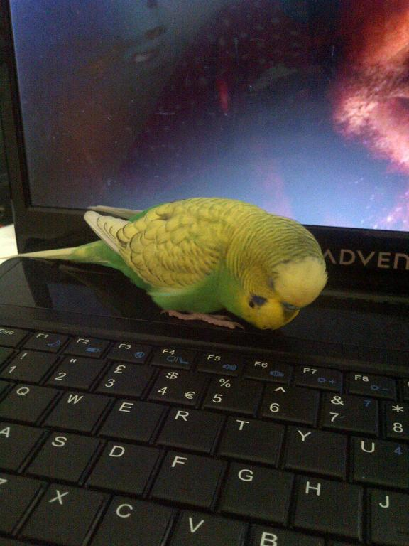 Can someone tell me the mutation of my budgie?-img-20120617-02315.jpg