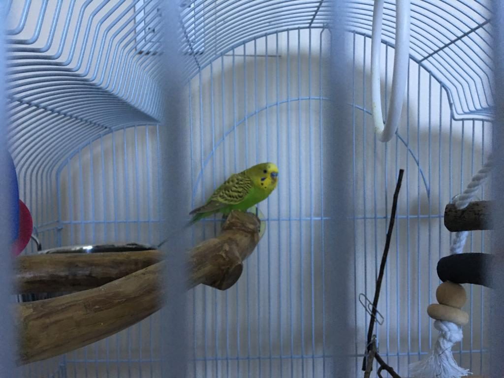 New budgie, is this a bad sign?-img-9835.jpg