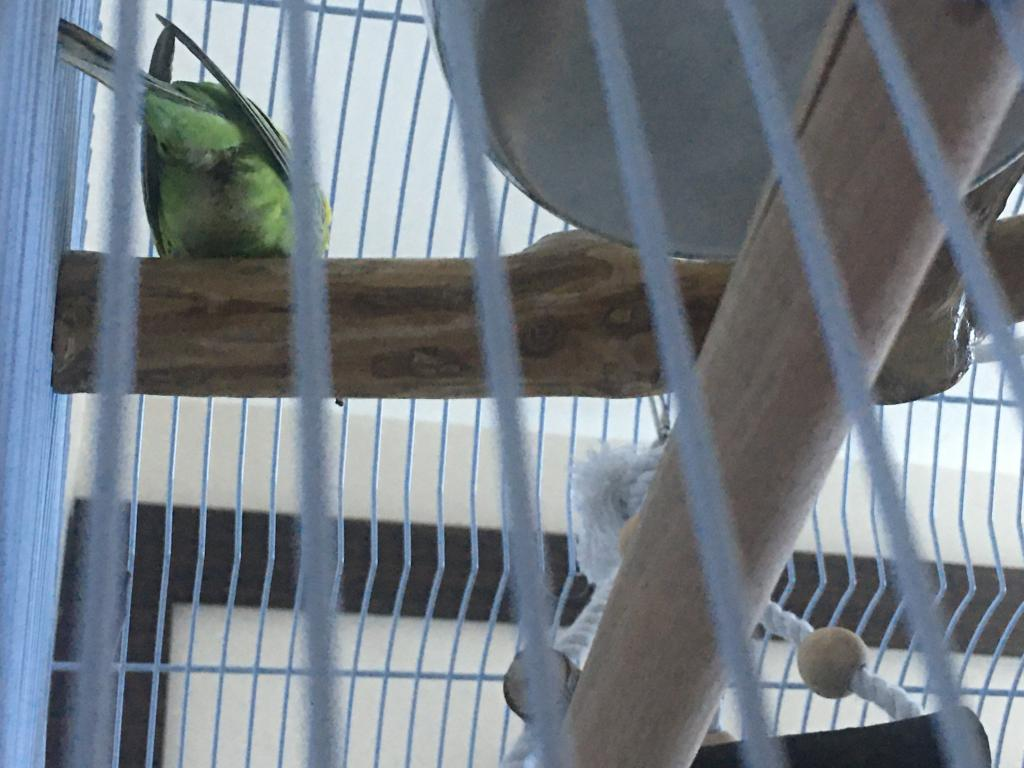 New budgie, is this a bad sign?-img-9836.jpg