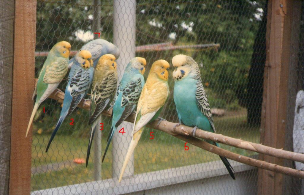 my budgies during 1990s.-img160.jpg